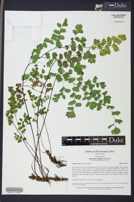 DUKE10114007